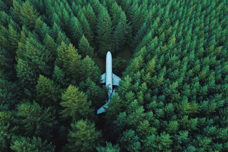 plane in the middle of a forest
