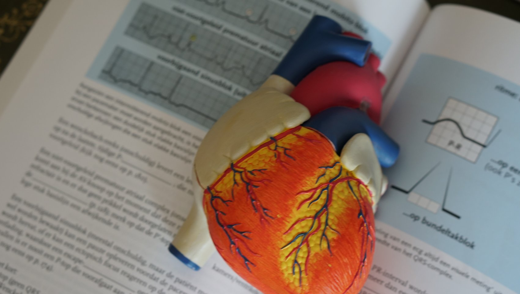 Model of human heart with textbook